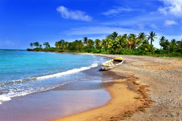 Jamaica Palm Trees