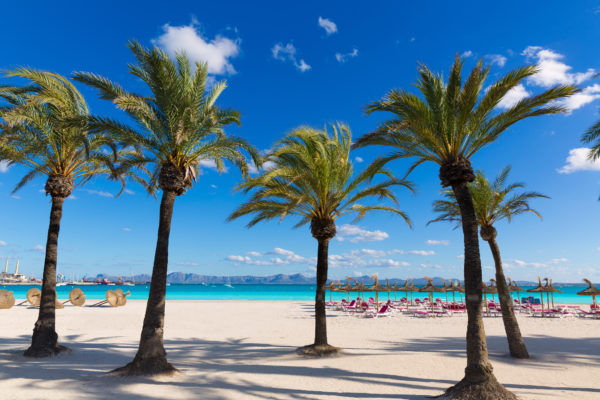 Mallorca Palm Trees Beach