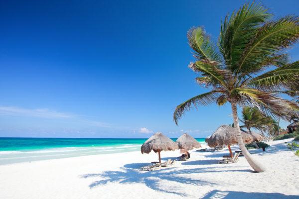 Mexico Beach Palm Trees