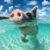 Bahamas Sea