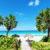 Cuba Palm trees