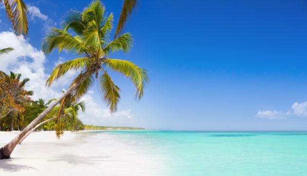Dom Rep Palm Tree