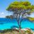 Chalkidiki Tree