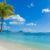 Mauritius Palm