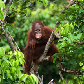 Off to the rainforest: Cheap roundtrip flights to Borneo island with baggage only 2505 kr