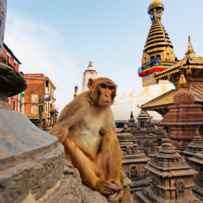 15 days in Nepal: cheap flights to Kathmandu for just 2669 kr