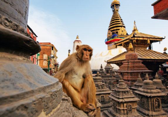 15 days Nepal